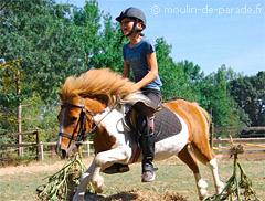 bafa poney cheval